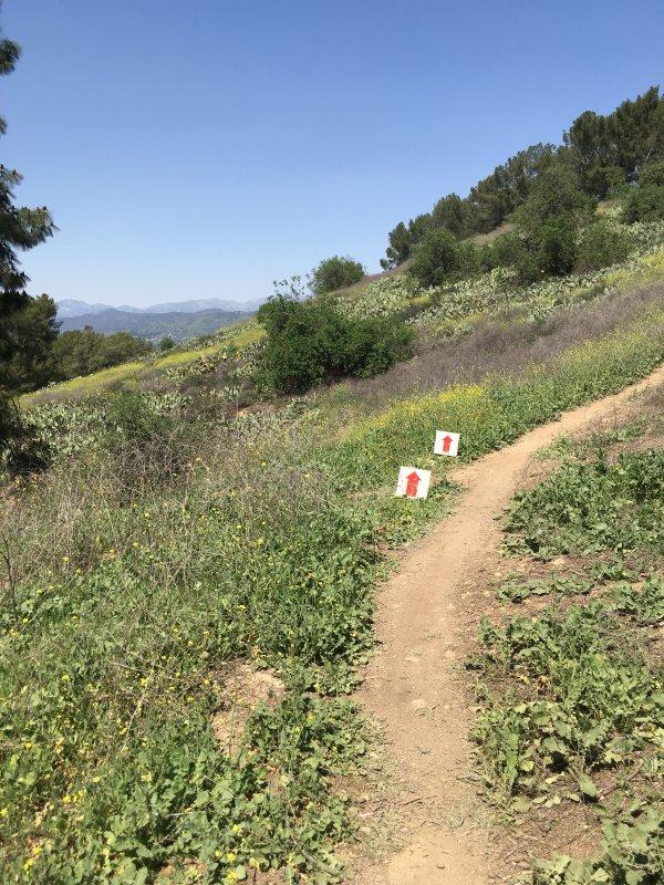 bonelli park climb kristine contento angell